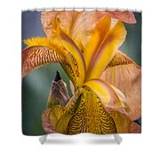 Pink Iris Shower Curtain by Eduard Moldoveanu