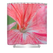 Pink Is Beautiful Shower Curtain