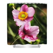 Pink Japanese Anemone Shower Curtain