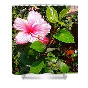 Pink Java Flower  Shower Curtain