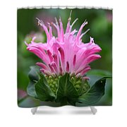 Pink July Shower Curtain