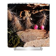 Pink Lady Cactus Shower Curtain