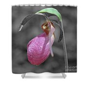 Pink Lady Slipper Partial Color Shower Curtain