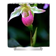 Pink Lady's Slipper Shower Curtain