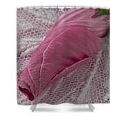 Pink Lavatera Bud Macro Shower Curtain