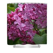 Pink Lilacs Shower Curtain