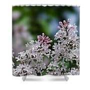 Pink Lilacs - Featured 2 Shower Curtain