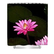 Pink Lilies And Pads Shower Curtain