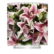 Pink Lilies I Shower Curtain