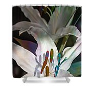 Pink Lily Dance Shower Curtain