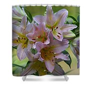 Pink Lily Fantasia Shower Curtain
