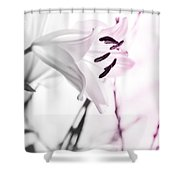 Pink Lily Feature Shower Curtain