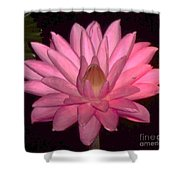 Pink Lily Flower Shower Curtain