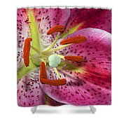 Pink Lily Up Close Shower Curtain
