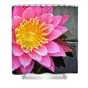 Pink Lotus Flower - Zen Art By Sharon Cummings Shower Curtain