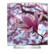 Pink Magnolia Shower Curtain by Rona Black