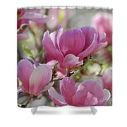 Pink Magnoloias In Bloom Shower Curtain