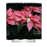 Pink Marble Poinsettia Shower Curtain