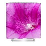 Pink Morning Glory Flower Macro Shower Curtain