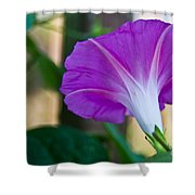 Pink Morning Glory Shower Curtain