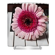 Pink Mum On Piano Keys Shower Curtain