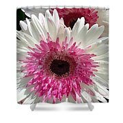 Pink N White Gerber Daisy Shower Curtain