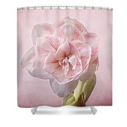 Pink Nymph Amaryllis Shower Curtain