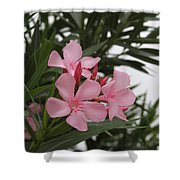Pink Oleander 4 Shower Curtain