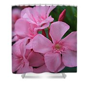 Pink Oleander 6 Shower Curtain