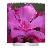 Pink Oleander Flower With Green Leaves In The Background   Shower Curtain