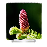 Pink On Green Shower Curtain