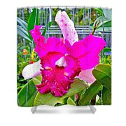 Pink Orchid At Maerim Orchid Farm In Chiang Mai-thailand Shower Curtain