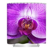 Pink Orchid Detail Shower Curtain