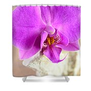 Pink Orchid On White Colored Driftwood Shower Curtain by Sabine Jacobs