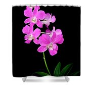 Pink Orchids 9 Shower Curtain