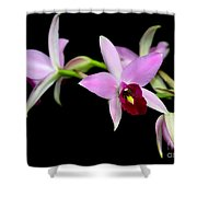 Pink Orchids Cascading Shower Curtain