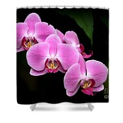 Pink Orchids In A Row Shower Curtain