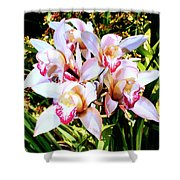 Pink Spirit Orchids Palm Springs Shower Curtain