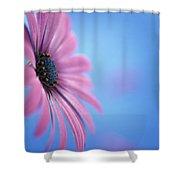 Pink Osteospermum Flower On Blue Shower Curtain