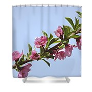 Pink Peach Blossoms Shower Curtain