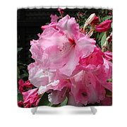 Pink Pearl Rhododendron Shower Curtain
