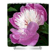 Pink Peony Flower Shower Curtain
