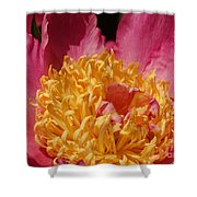 Pink Peony 3 Shower Curtain