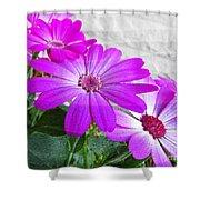 Pink Perciallis Ragwort Flower Art Prints Shower Curtain