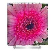 Pink Petals Shower Curtain