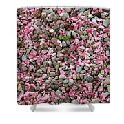 Pink Petals On Stones  Shower Curtain