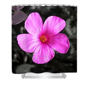 Pink Phlox Shower Curtain