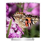 Pink Phlox With Butterfly Shower Curtain