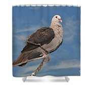 Pink Pigeon Shower Curtain