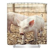 Pink Piglet Shower Curtain